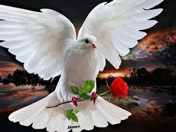 message de paix sur mon blog bisous !