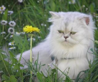 ben quoi c est une fleur de pisenlit mdr !
