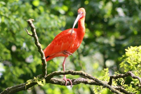 ibis pairi daiza 2017
