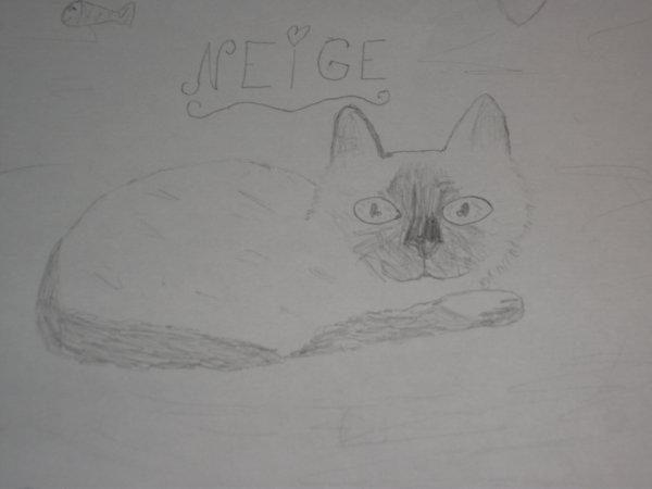 dessin de chat(réaliste)