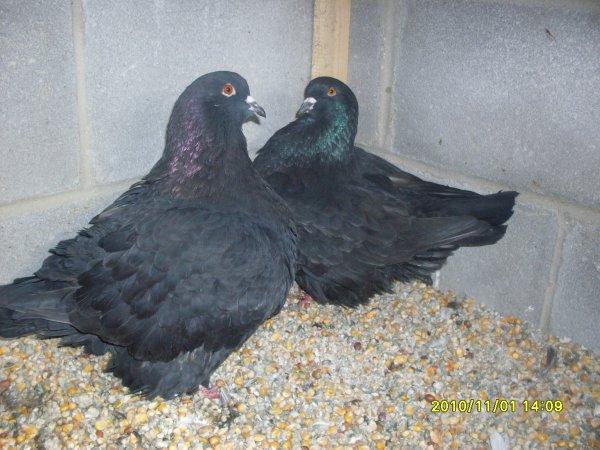 couple mondain noir