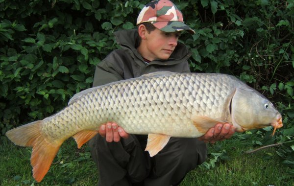 common carp !