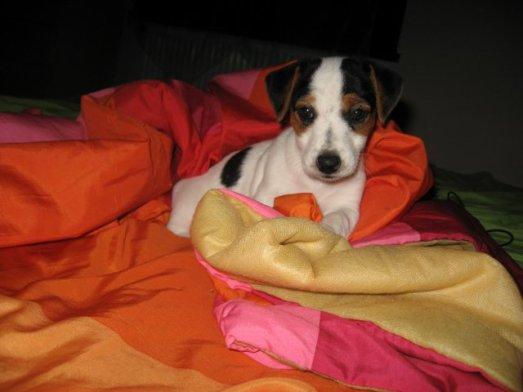 Mon bb chien !!!!!!!!