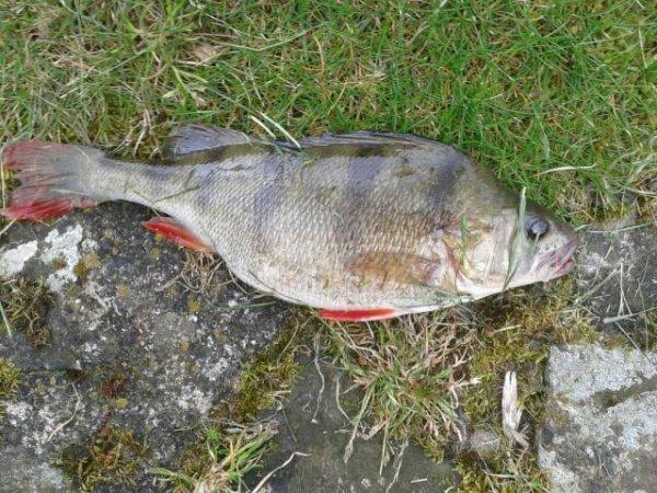 Ouzbekistan ajdarkoul la pêche