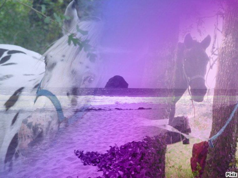 Zippo et Inuit je vous adores ♥!!