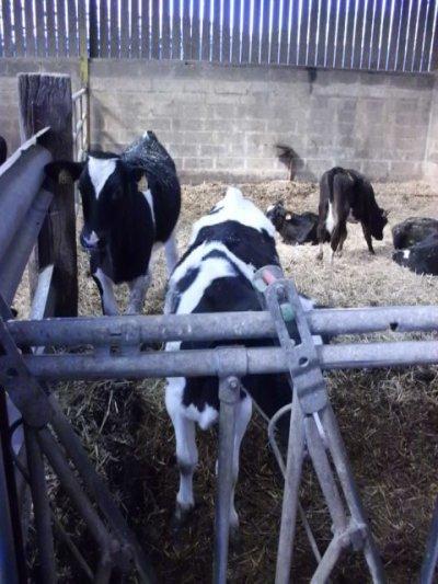 une journèe a la  ferme    avec les petits