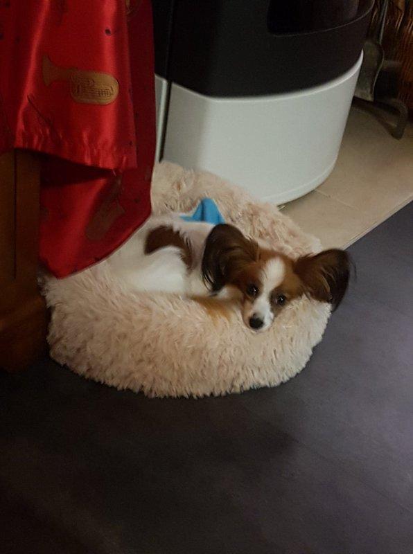 Nugget heureux dans son nouveau couffin trouvé au pied du sapin !