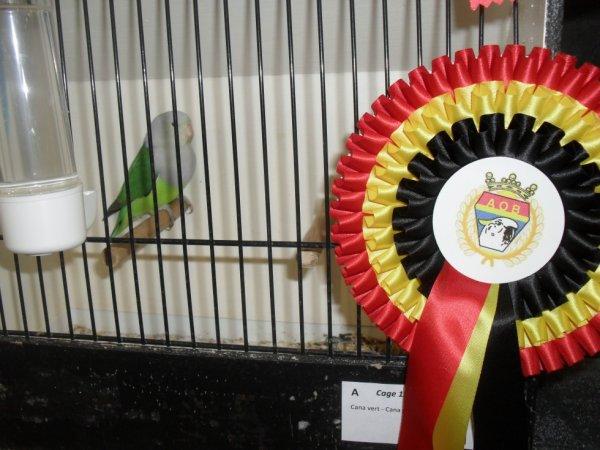 championnat de belgique 2013