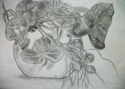 Les Orchidées.