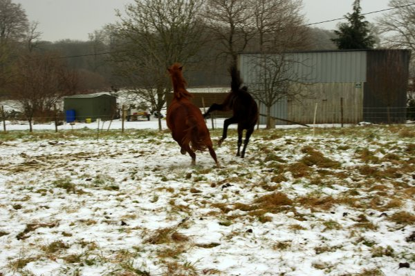 Shotting dans la neige :D