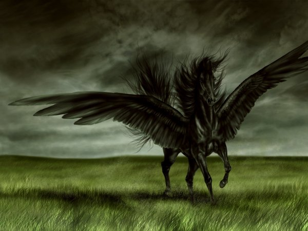 Cheval mythique !