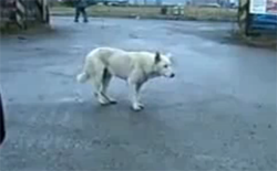 Un chien qui danse