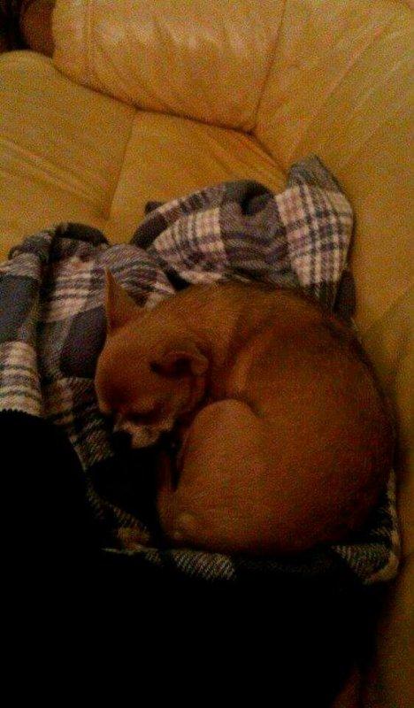 Ma petite chienne Emy