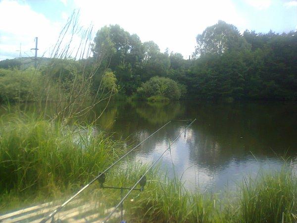 photo d un brochet accompagnée de l étang privée que je peche