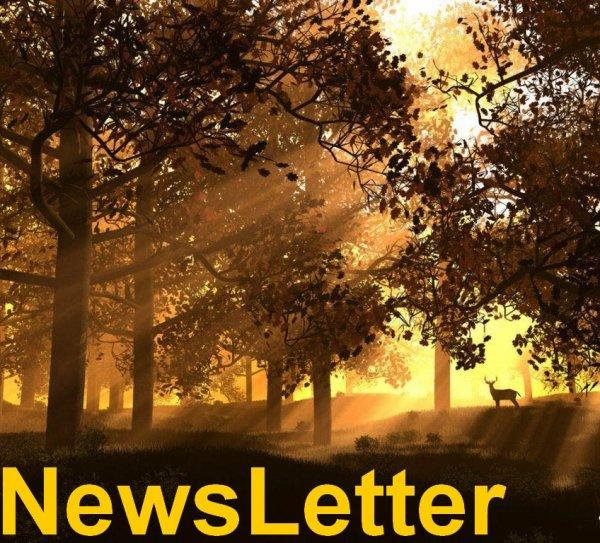 News Letter !