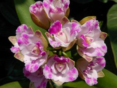 #25 bis - Orchid Garden pictures