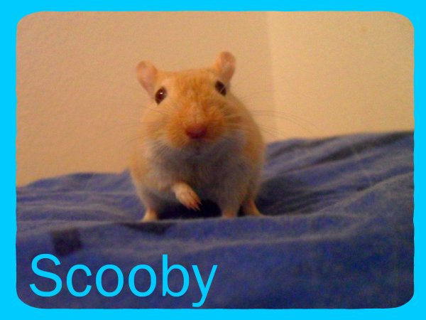 Scooby ;)♥