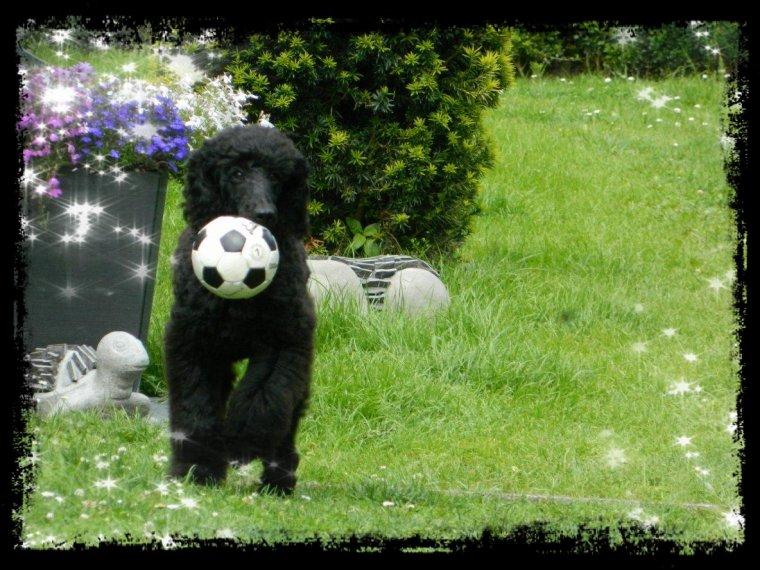 Cookie dans le jardin