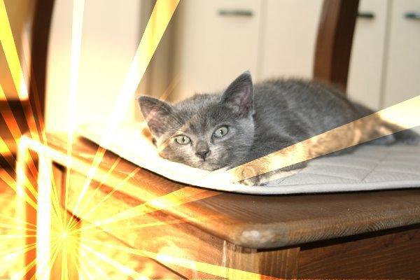 Griss; my cat, à tout jamais dans mon coeur </3