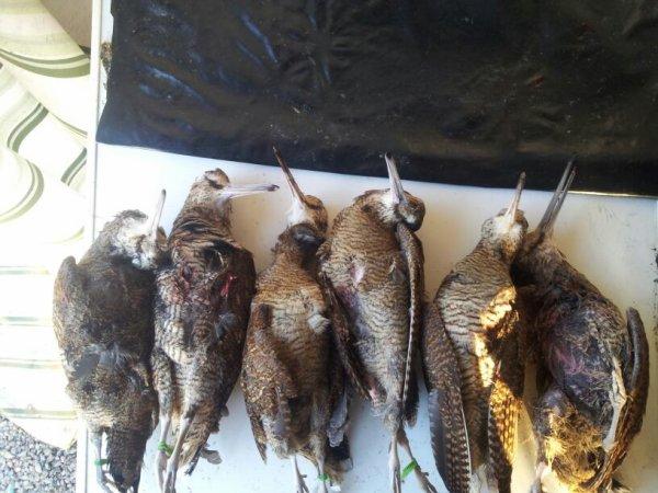 Une belle matine de chasse