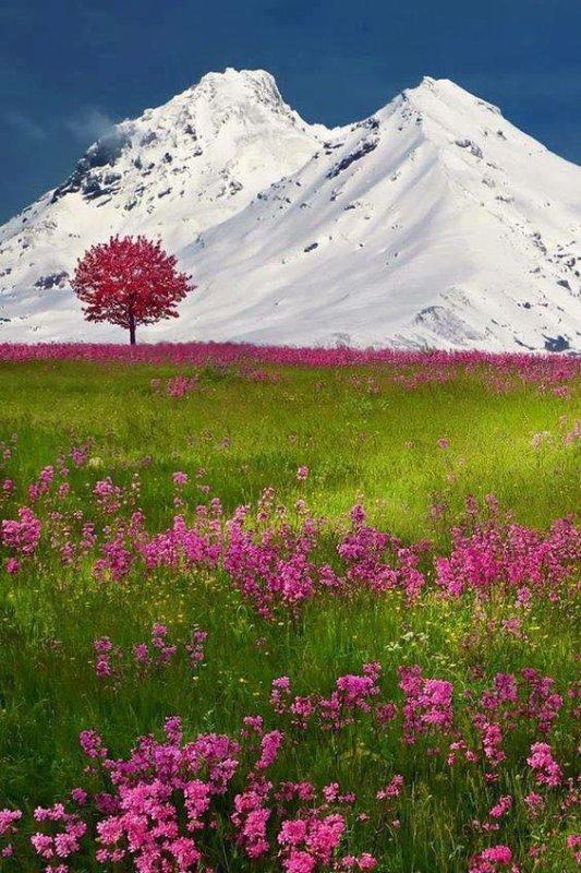Les Alpes (Suisse)