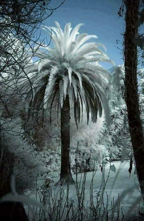 Le Maroc sous la neige ...