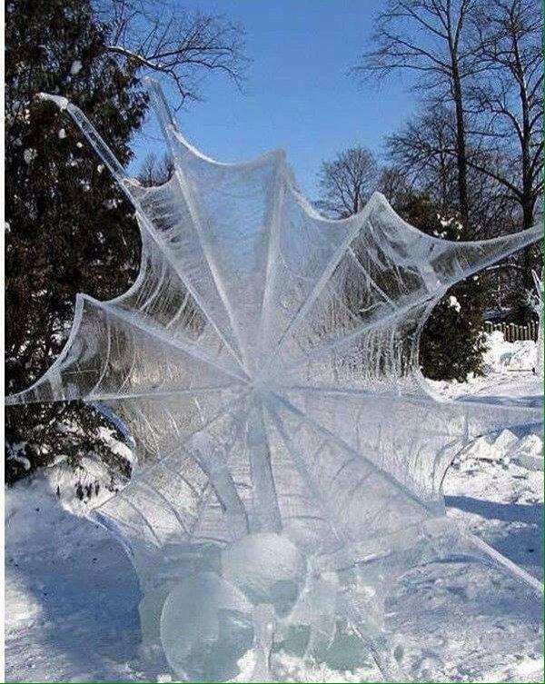 Une toile d'araignée gelée ...
