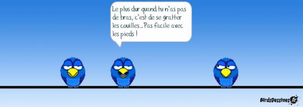 - BIRDS DESSINEES IV -