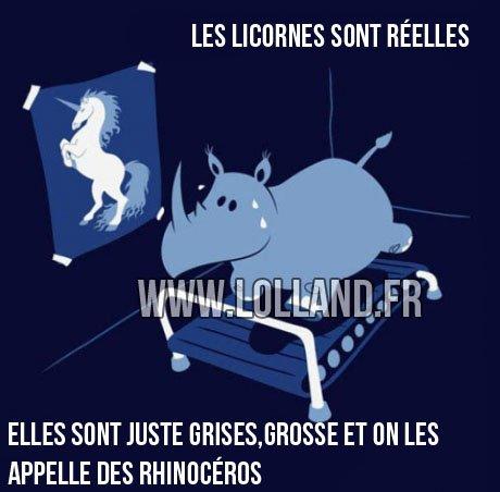 Les licornes existes