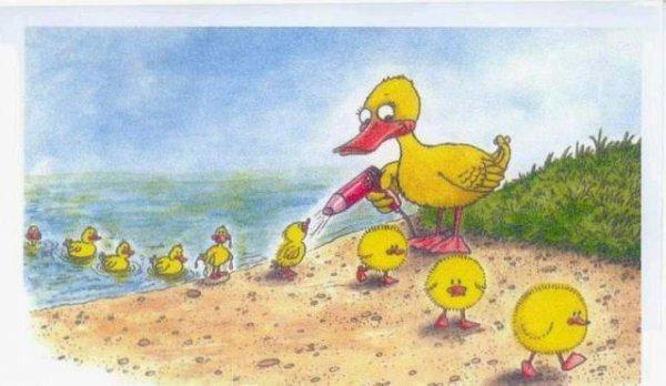 Les canard