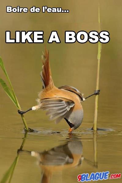 Lika a boss