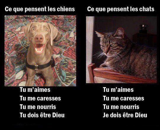 Logique chat , chien