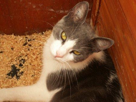 les chats. la soeur de Trésor, clochette (la chatte noir) et et plus la. )=