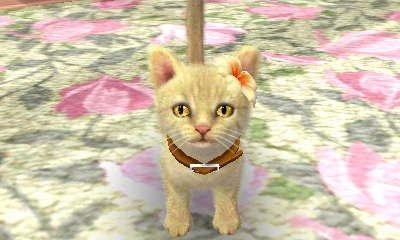 Ma nouvelle chatte ! Et son amie Bijoux elles s'adores