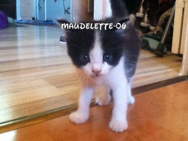 voici notre nouveau chaton il s'appelle Felix