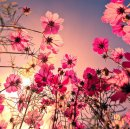 Photo de I-m-a-poppy
