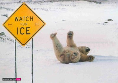 l ours blanc ne sais pas lire !!