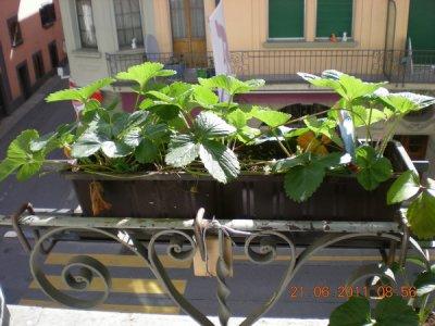 Mon mini jardin...