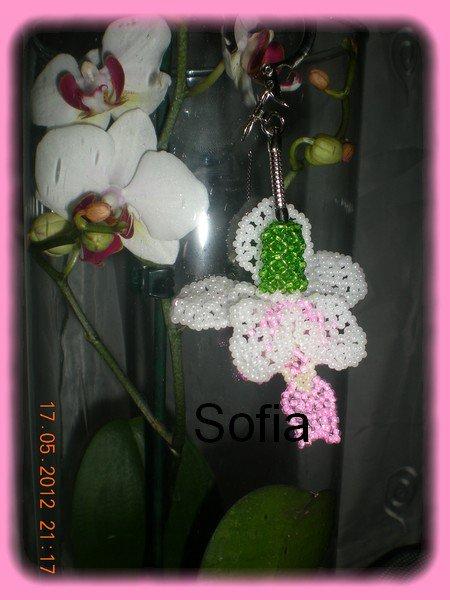 Orchidée papillon une création...