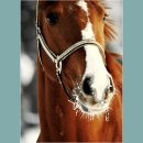 Photo de Whitee-Horse