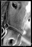 Photo de x-Horse-PiXx-x