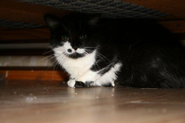 Le déménagement: Les stress du chat