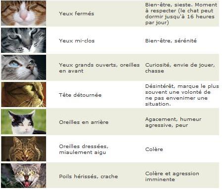 Les attitudes du chat.