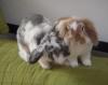 La cohabitation des lapins: