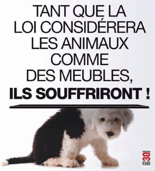 Pétition pour le statut juridique de l'animal ! Remixez svp !!!