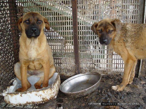 Des millions d'animaux de compagnie sont torturés et mangés chaque année en Corée du sud, SIGNEZ LA PETITION !!!