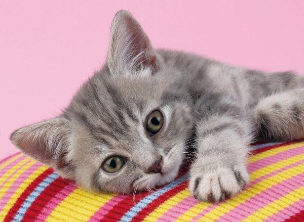 Comment reconnaître un chat malade ?