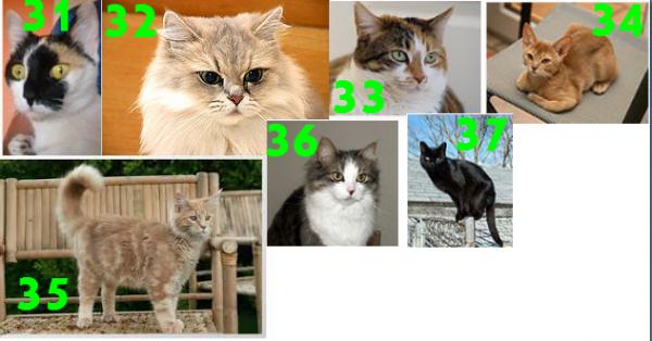 Les robes du chat :