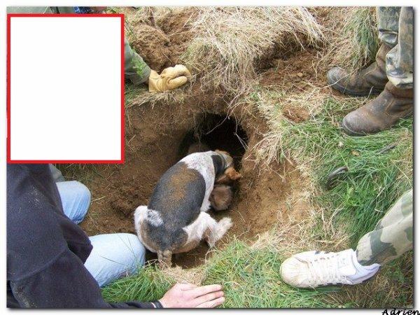 Non au déterrage du renard !! Pratiques horribles et barbares