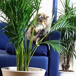 Les dangers pour le chats. Faire Attention !